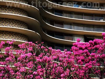 Detalhe do Edifício Niemeyer e dos ipês na Praça da Liberdade, em Belo Horizonte - Minas Gerais - Por Tito Garcez