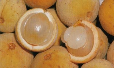أغرب الفاكهة في العالم strangest fruit in the world