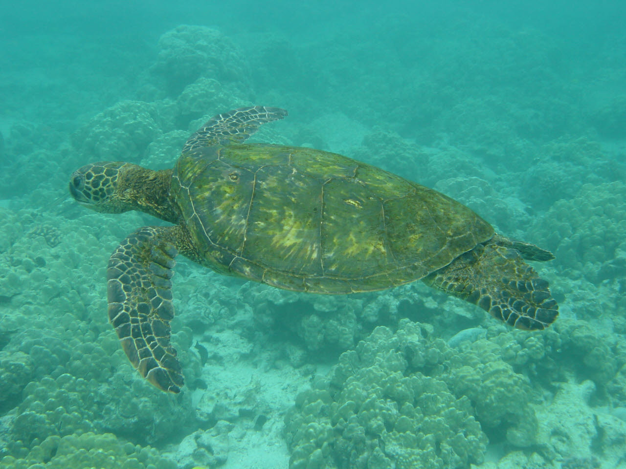 Green Sea Turtles 23