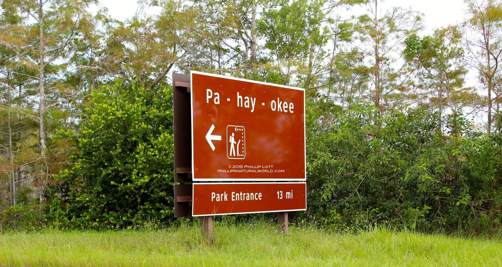 Everglades%2BNational%2BPark%2BShark%2BRiver%2BSlough%2BSeptember%2B2015%2BCopyright%2BPhillip%2BLott%2BPhillip%2527s%2BNatural%2BWorld%2BPa-hay-okee.jpg