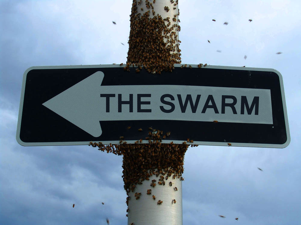 H.P. Sneakstep : The Swarm