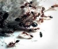 طرق عبقرية غير مكلفة للتخلص من النمل والصراصير !!!!