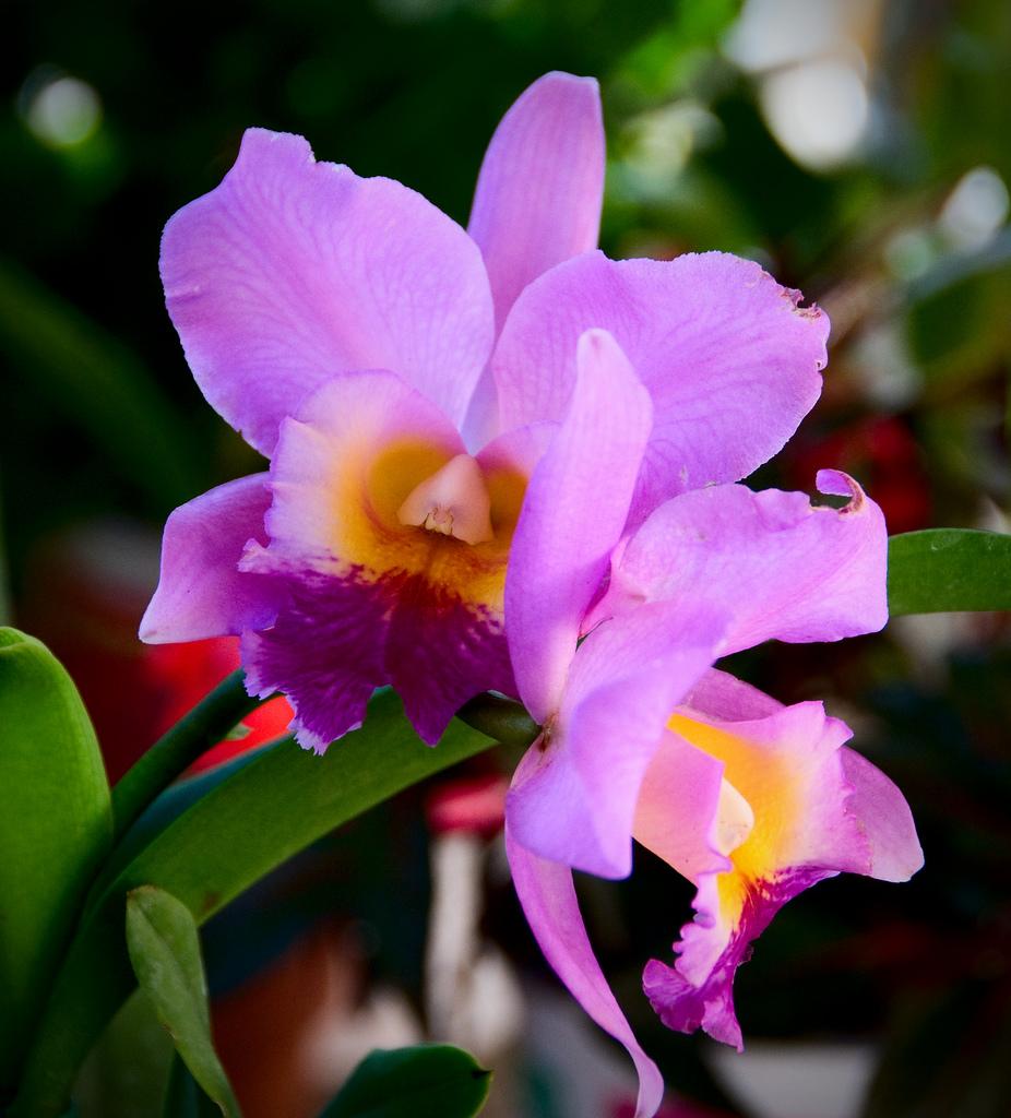 Bunga itu selalu dengan keindahannya