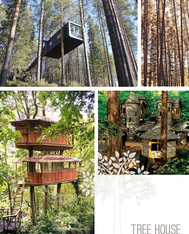 maison dans arbres