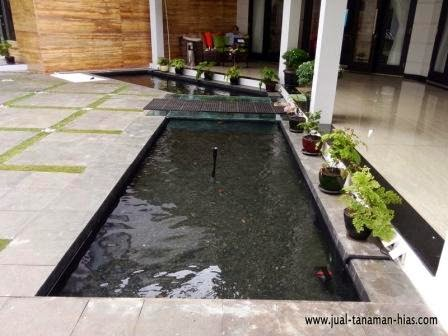specialis mengerjakan filter kolam ikan ko'i ~ tukang rumput
