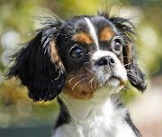 Top 20 Most Famous Dog Breeds akita inu