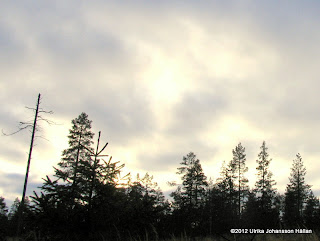 himmel och skog
