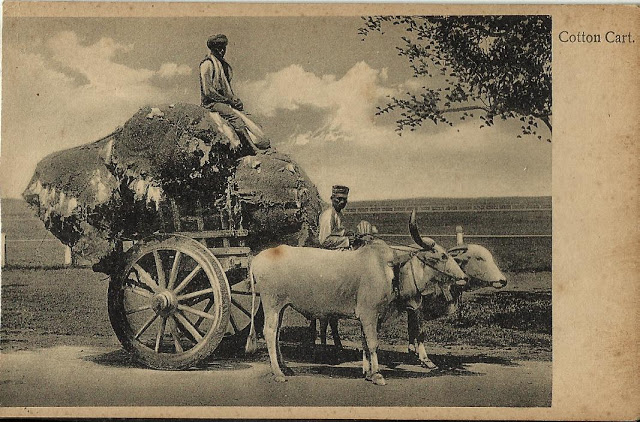 In My Collection I Have A Vintage Post Card Of Indian Village People Carrying Their Cotton On The Bullock Cart This Printed