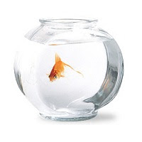 """Como se comporta um peixe em """"gravidade zero"""""""