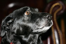 our Molly...June 1999 - July  24, 2011