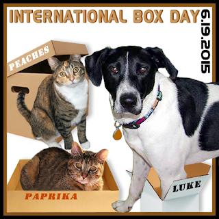 International Box Day #cats #dogs #photosofcats #catsinboxes