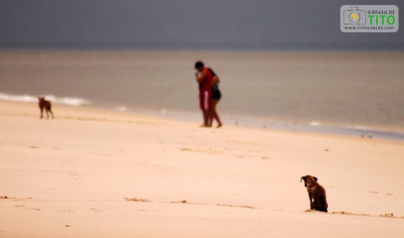 Casal e cachorros abandonados na praia do Vai-Quem-Quer, na ilha de Cotijuba, no Pará