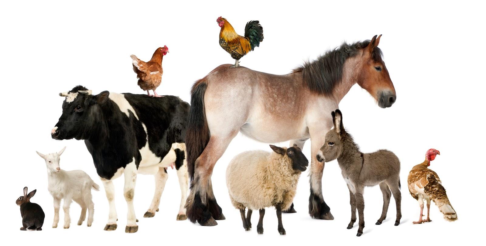 Banco de im genes animales muy lindos de nuestro planeta 12 fotos en hd - Image animaux gratuite ...