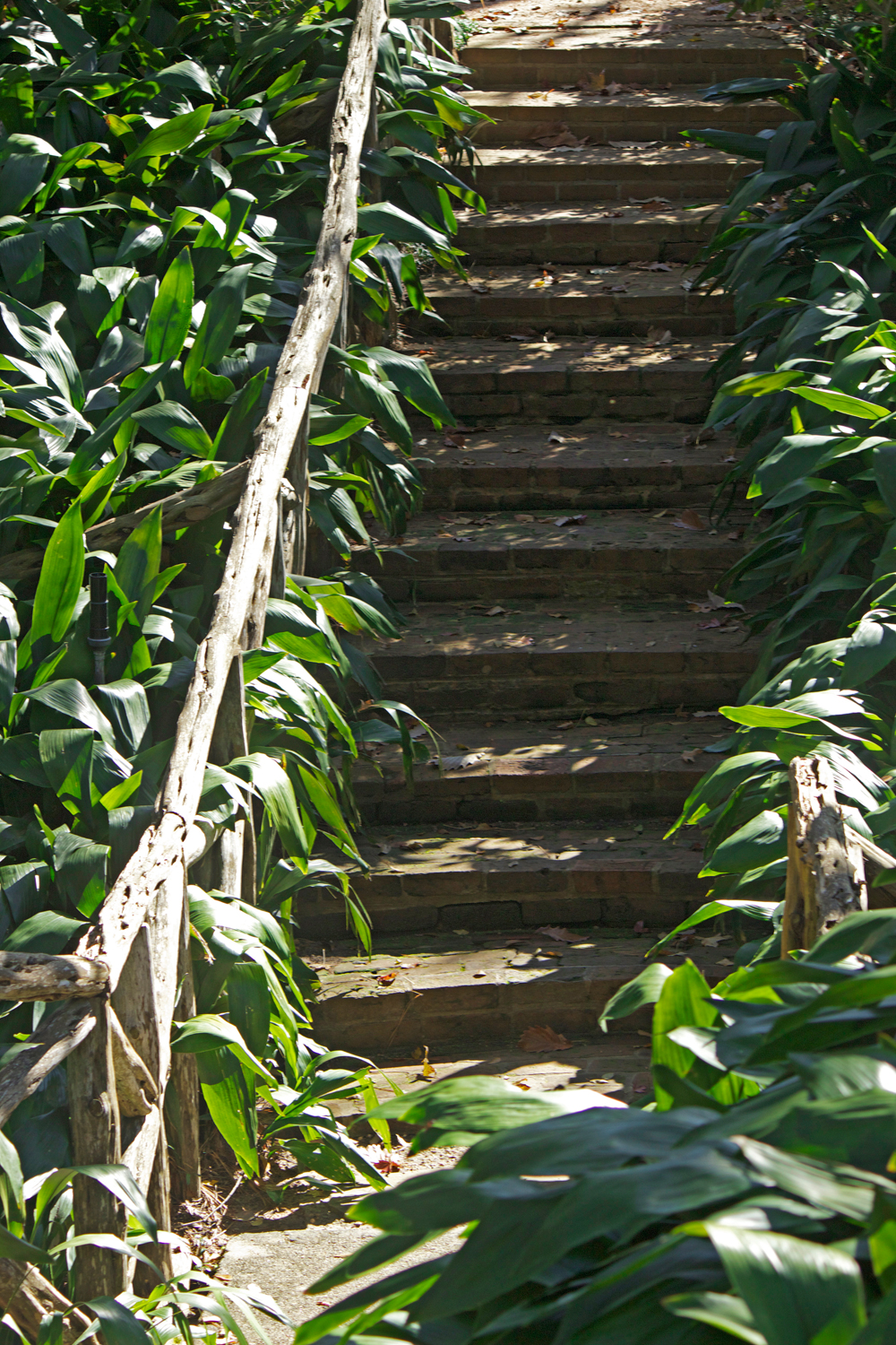 palm leaves wooden staircase - photo copyright Allison Beth Cooling