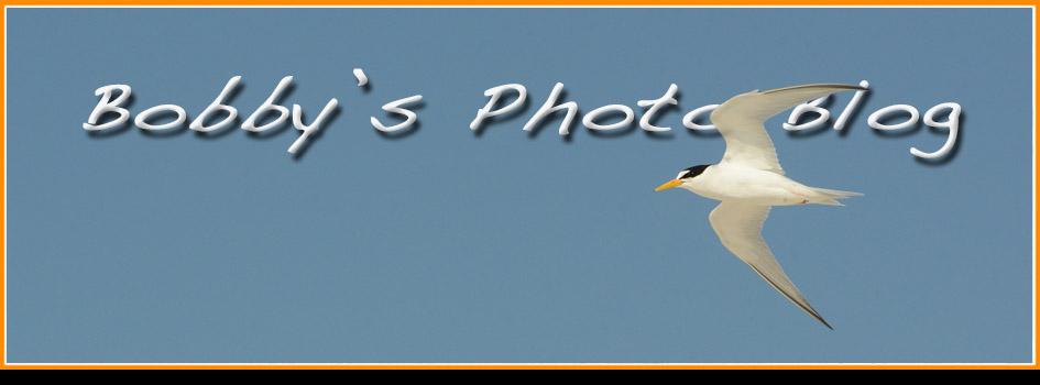 Bobby Harrison Bird Photography
