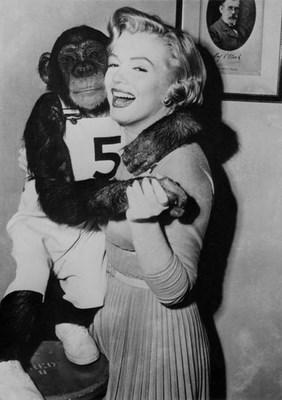 "En 1952 chimpacé película ""Me siento rejuvenecer"" (""Monkey Business"")."
