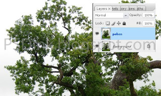 Cara Mudah Memisahkan Gambar Pohon dari Backgound