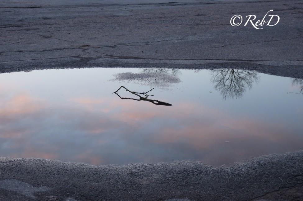 Vattenpöl som speglar himlen. foto: Reb Dutius