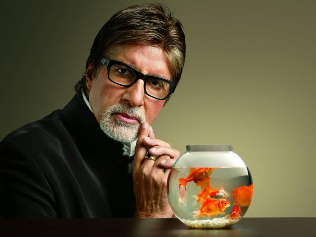 http://3.bp.blogspot.com/-aVnXvN45iXQ/UP-Z_ZyLsqI/AAAAAAAAAX0/gD5gdp6Yp5c/s1600/Amitabh+Bachchan+Wallpapers+2013-1.jpeg