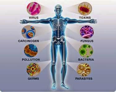 imunisasi badan