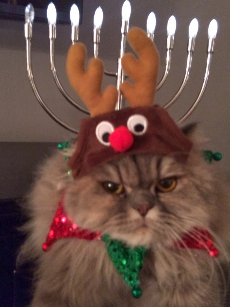 Funny cats - part 81 (40 pics + 10 gifs), cat pics, cat in reindeer hat