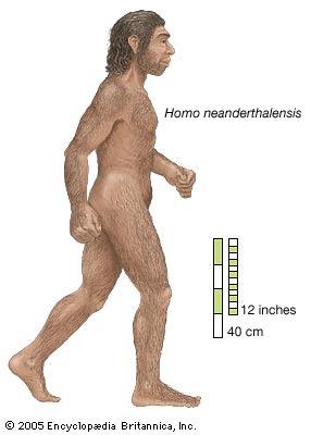 hombres prehistoricos en Europa Homo neanderthalensis