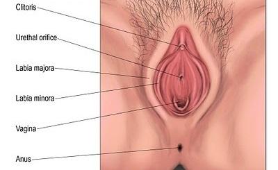 from Jett gambar porno oral sex vagina