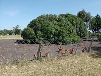 Tiene zonas rurales,con animales de granja...