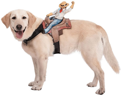 Costumes For Dogs