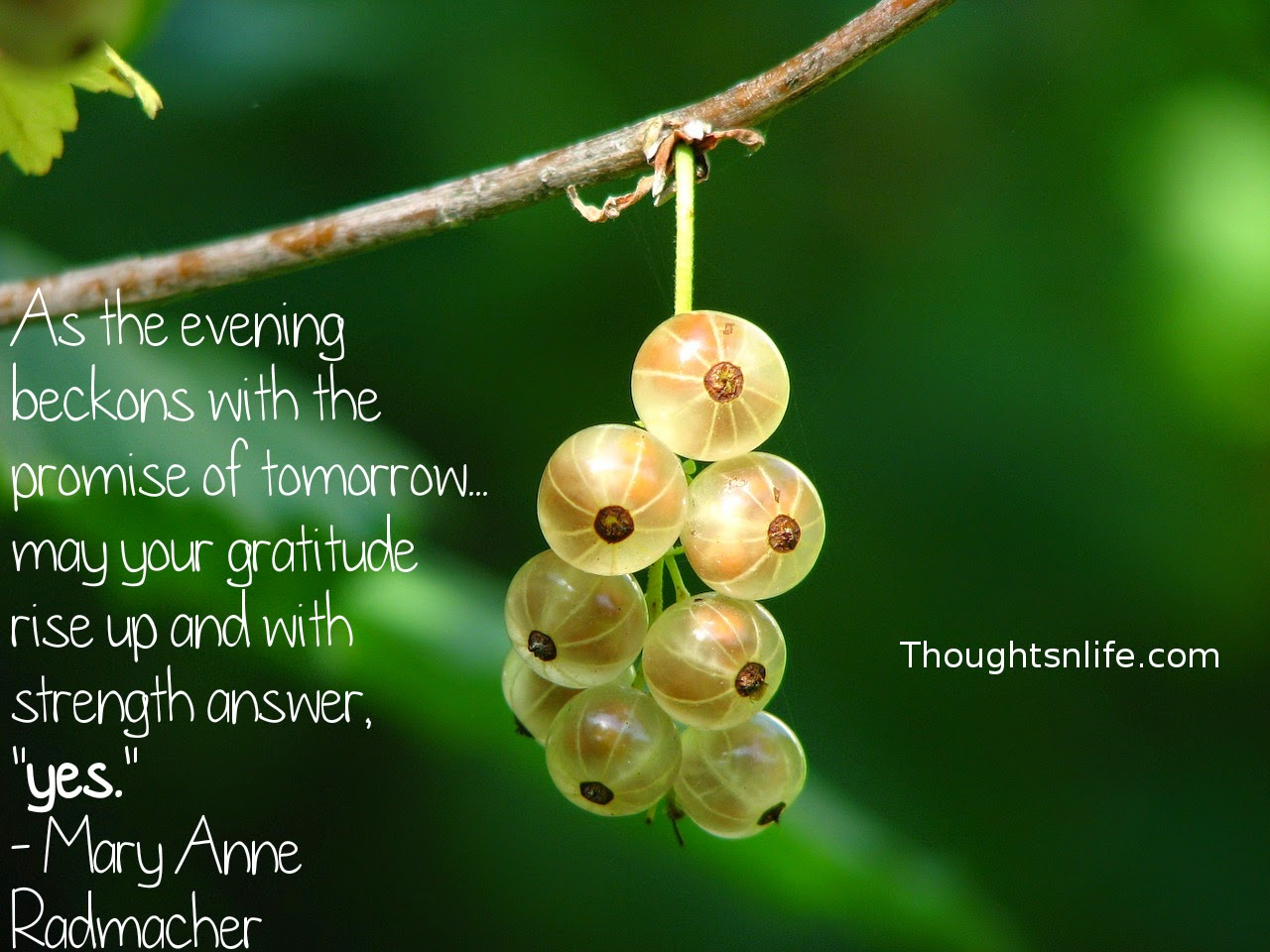 "Thoughtsnlife.com: As the evening beckons with the promise of tomorrow... may your gratitude rise up and with strength answer, ""yes."" - Mary Anne Radmacher"
