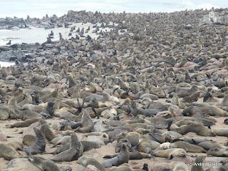 Reisen Afrika Namibia Cape Cross Seal Reserve