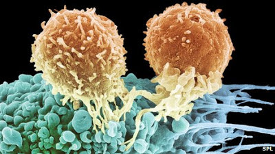 cancer, medicine, HIV, T-cell