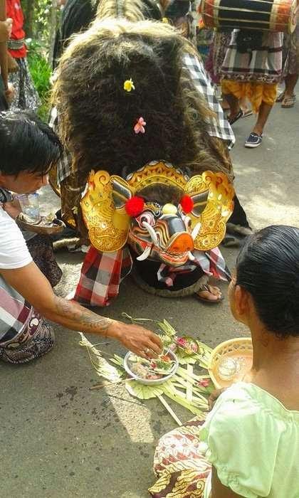 Barong Bangkung, Pig dancing around the village