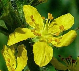 TDAH e Florais - as outras medicinas - Clique na imagem