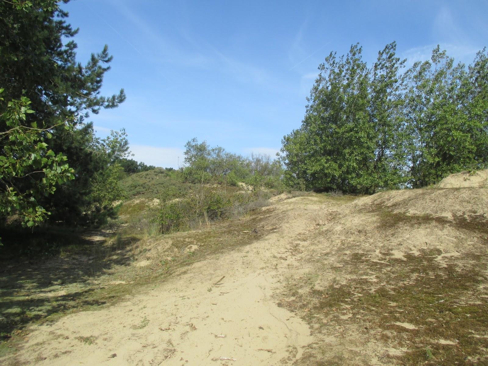 Duinbossen in De Haan