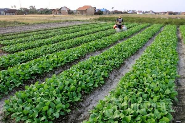 budidaya pertanian organik
