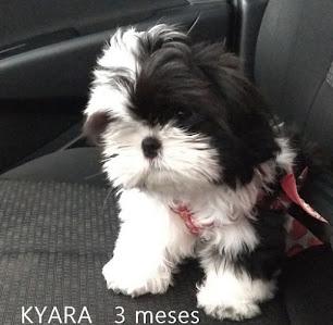 Kyara, minha bebezinha linda!