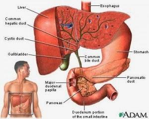 Cara Pengobatan Penyakit Liver