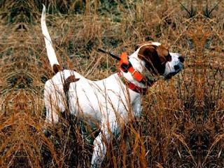 collare radio localizzatore per cani da caccia