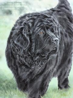 Tierportrait: Hundeportrait mit Pastellkreide zu Weihnachten malen oder zeichnen lassen