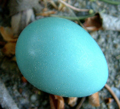 It Was A Robins Egg And It Was Blue