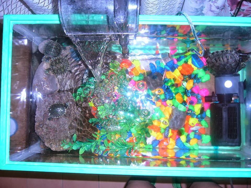 Tortugas filtros para peceras for Filtro para estanque de tortugas