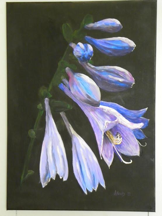 008 Blume 5