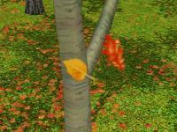 deciduous-leaffall