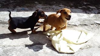Minhas amadas cachorrinhas! Foi um salto perfeito!