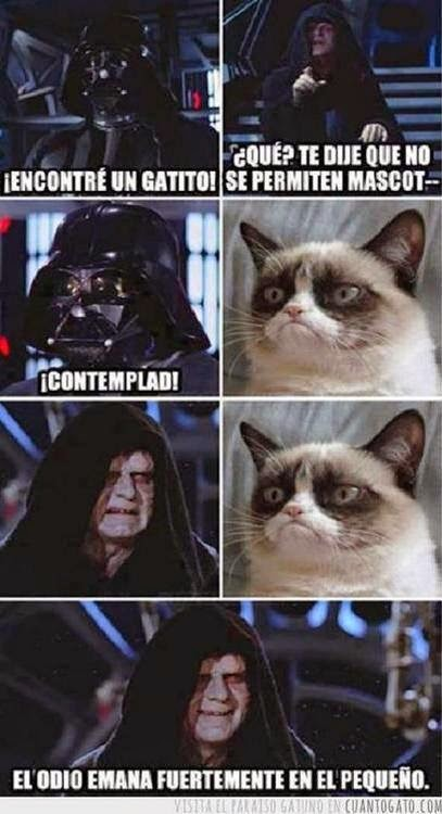 darth gato may the 4th be with you
