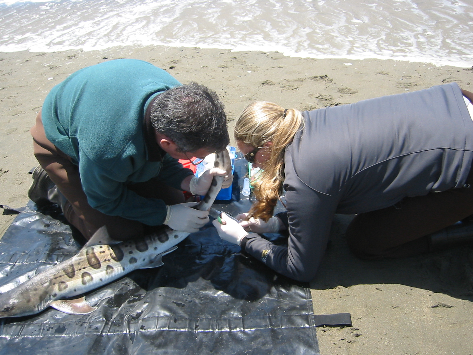 the marine mystery The mystery of the marine monster on south carolina beach a bizarre creature that washed ashore last week in folly beach, sc, sparked speculation in the area and on the internet that a dead sea monster might have been discovered.