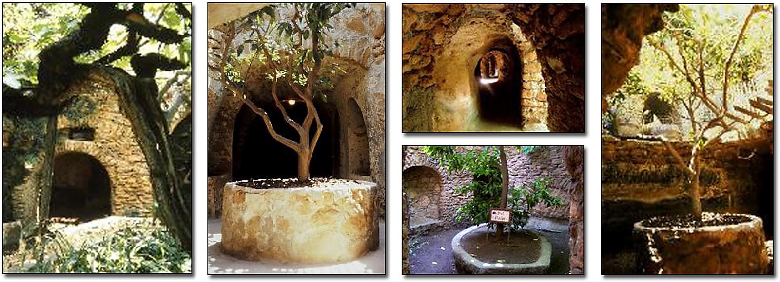 Il Regno: Baldassare Forestiere and his Underground Gardens