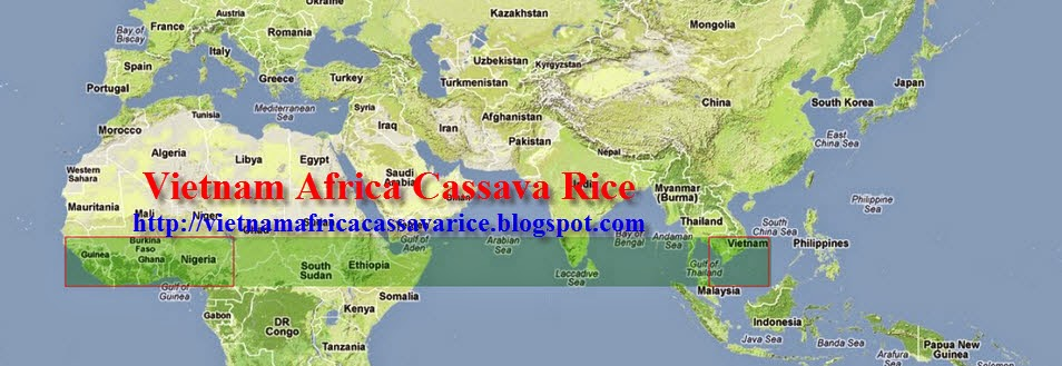 Vietnam Africa Cassava Rice