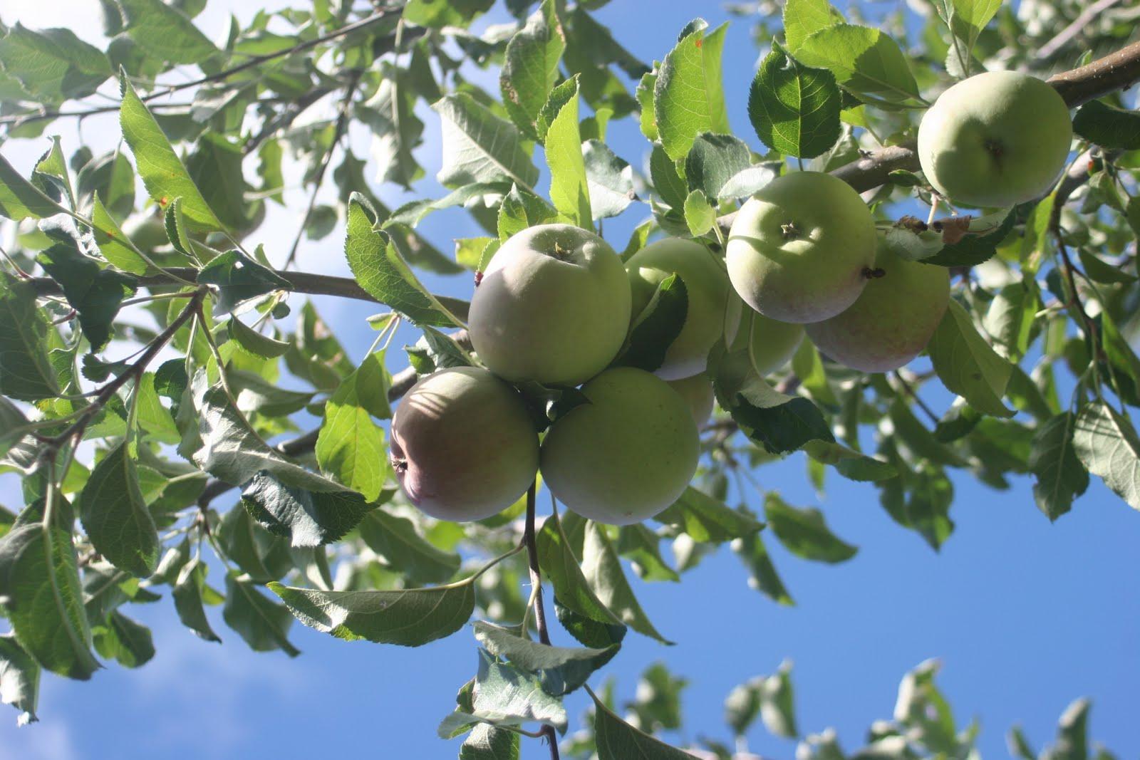homemade creations backyard apple trees and handmade quilts society